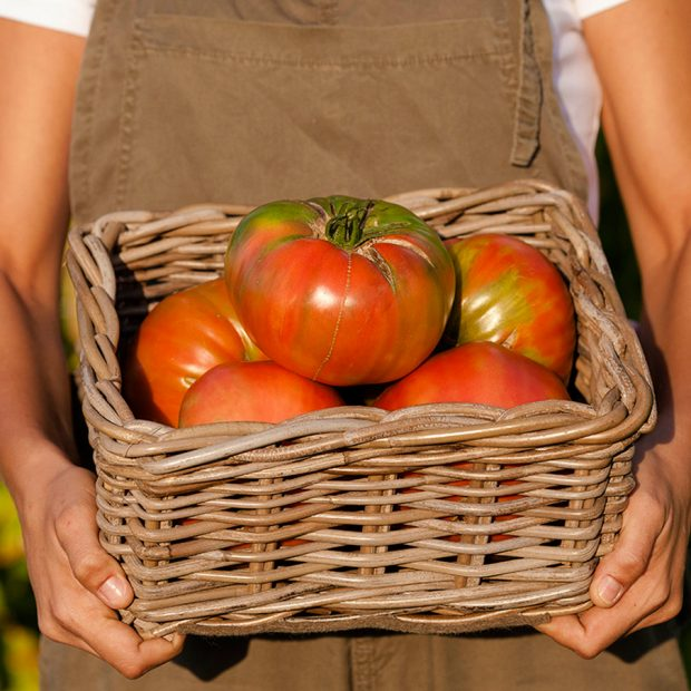 Apadrina nuestras verduras ecológicas