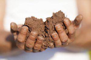 Agricultor ecológico de corazón. La huerta de Rizos.